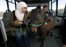 Mona Ramouni, who is blind, rides a bus to work with her guide horse in Lincoln Park, Mich. Growing up in Detroit, Ramouni could never get a dog because her devout Muslim family considered dogs unclean. (AP Photo/Carlos Osorio/File)